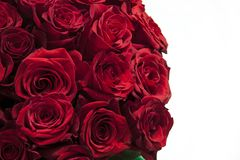 Romantic background of a bouquet of red on a white background. Greeting card for Valentines day, birthday, anniversary stock image