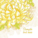 Romantic  background with chrysanthemum. Abstract romantic  background with chrysanthemum Stock Photography