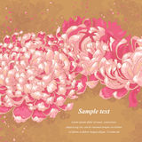 Romantic background with chrysanthemum royalty free illustration