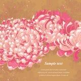 Romantic background with chrysanthemum royalty free illustration