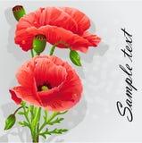 Romantic background with poppies-EPS10. Romantic background with poppies for your text Royalty Free Stock Image