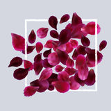 Romantic background with red, pink rose petals Stock Photos