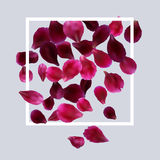 Romantic background with red, pink rose petals Royalty Free Stock Photo