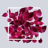 Romantic background with red, pink rose petals Royalty Free Stock Images