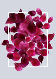 Romantic background with red, pink rose petals Stock Photography