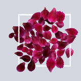 Romantic background with red, pink rose petals Stock Images