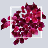 Romantic background with red, pink rose petals Stock Photo