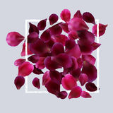 Romantic background with red, pink rose petals Stock Image