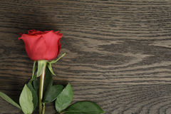 Romantic background with red rose on wood table. Top view Stock Photography