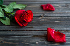 Romantic background with red rose on wood table, top view.  Royalty Free Stock Photo
