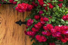 Romantic background with red roses on wood table Stock Photos