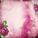 romantic background with  rose Royalty Free Stock Photos