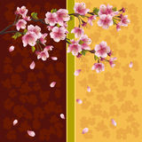 Romantic background with sakura - Japanese cherry  Royalty Free Stock Images