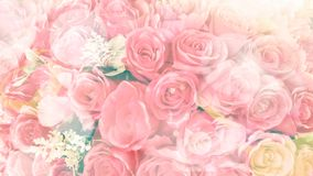Romantic blurred pink rose background. For Valentine day text overlay stock images