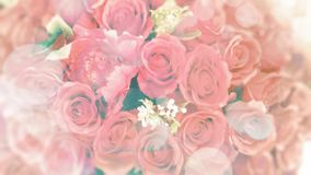 Romantic blurred pink rose background. For Valentine day text overlay stock photography