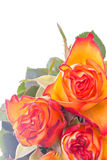 Romantic bouquet of orange coloured roses Stock Photo
