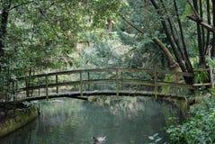 Romantic bridge over water. Small and romantic Monet-like bridge in Miramare, Trieste (Italy Royalty Free Stock Images