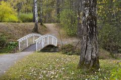 Romantic bridge in the park with birches royalty free stock photo