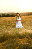 Romantic brunette woman in sunset corn field Royalty Free Stock Image