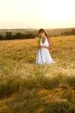 Romantic brunette woman in sunset corn field. Wear white dress, holding bouquet of flowers Royalty Free Stock Image