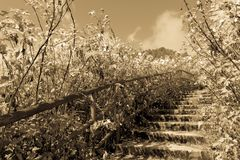 Romantic and bucolic landscape with stair. Sepia and antique-style image, old postcard stock photo