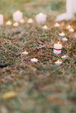 Romantic candle decoration in the pine needles at the evening stock photography