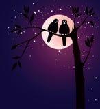 Romantic card with birds Stock Photos
