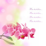 Romantic card with pink orchid Stock Photo