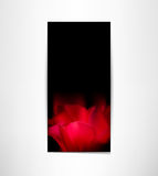 Romantic card with red tulip petals Stock Photography