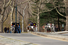 Romantic carriage rides in Central Park, New York royalty free stock images