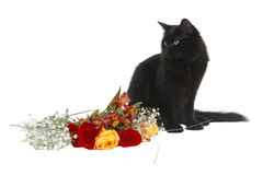 Romantic cat Stock Images