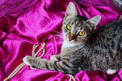 Romantic cat Royalty Free Stock Photo