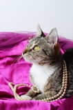 Romantic cat royalty free stock photography