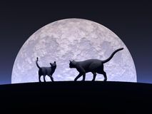 Romantic cats Stock Images