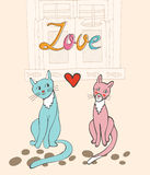 Romantic cats couple Royalty Free Stock Photos