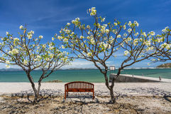 Romantic chair. At Sichang island, Thailand Stock Photo