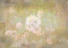 Romantic chamomile flowers in garden. Grunge floral background. royalty free stock photo