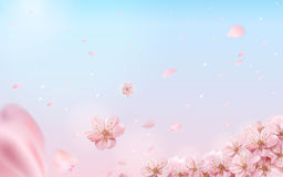 Romantic cherry blossom background Stock Images