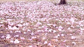 Romantic cherry blossom on nature background in Spring season. Pink tone, petal, flower on ground, Environment and season concept stock photo