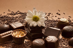 Romantic chocolate. Variety of chocolate truffles and pralines with a daisy flower Royalty Free Stock Images