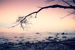 Romantic colorful sunset at wavy sea. Stony beach with tree and pink sky in water mirror Stock Photography