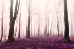 Romantic colors of the forest into the fog Royalty Free Stock Photos