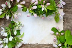 Romantic composition with apple flowers Royalty Free Stock Image