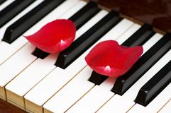 Romantic concept. Rose petals on piano keys Stock Images