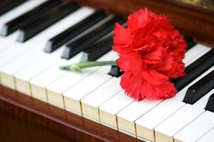 Romantic concept - red carnation on piano keys. Romantic concept -  red carnation on piano keys Royalty Free Stock Images