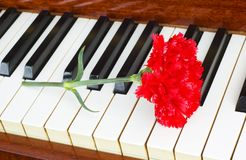 Romantic concept - red carnation on piano keys. Romantic concept - red carnation  on piano keys Royalty Free Stock Photo