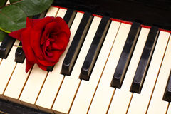 Romantic concept - red rose on piano keys. Romantic concept - deep red rose on piano keys Royalty Free Stock Photography