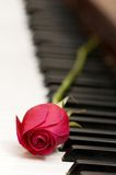 Romantic concept - red rose on piano keys. Romantic concept  - red rose on piano keys Royalty Free Stock Photos