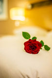The romantic concept with rose on the bed Stock Photography