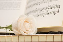 Romantic concept - white rose on piano keys stock photos